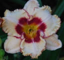 <h5>Hopelessly Devoted</h5><p>Züchter: Harry 2009 Blüte: 15 cm Höhe: 71 cm Ploide-Gruppe:																																																																																																																																																																																																																																																																																																																																																																																																																																																																																																													</p>