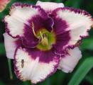 <h5>Rocky Mountain Summer</h5><p>Züchter: Salter 2002 Blüte:  Höhe:  Ploide-Gruppe:</p>