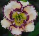 <h5>Soul Catcher</h5><p>Züchter: Petit 2011 Blüte: 14 cm Höhe: 71 cm Ploide-Gruppe:</p>